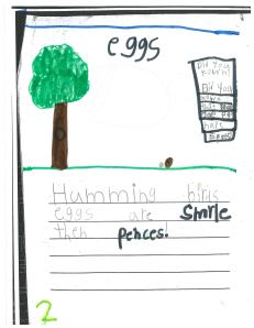 This student compared two things.  Hummingbirds' eggs are smaller than pencils, she wrote.