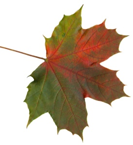 The changing of the leaves can only mean one thing…marking periods are coming to an end.