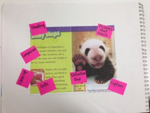I used this page and others from Pandas by Anne Schreiber as a mentor text for first and second graders' information books.