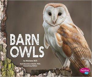 barn owls 3